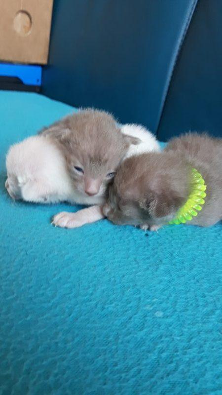 Kittens Ardeleana 2018